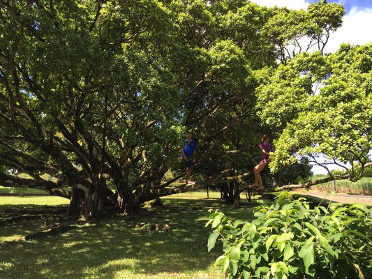 visite touristique : Rhumerie Saint AUBIN SUD ILE MAURICE