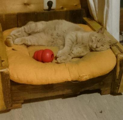so gemütlich das man gleich eingeschlafen ist auf seinem Paletten-Katzenbett