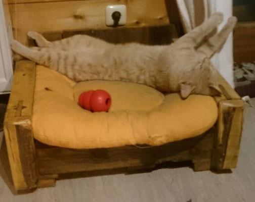 Mietze total entspannt auf seinem Paletten-Katzenbett