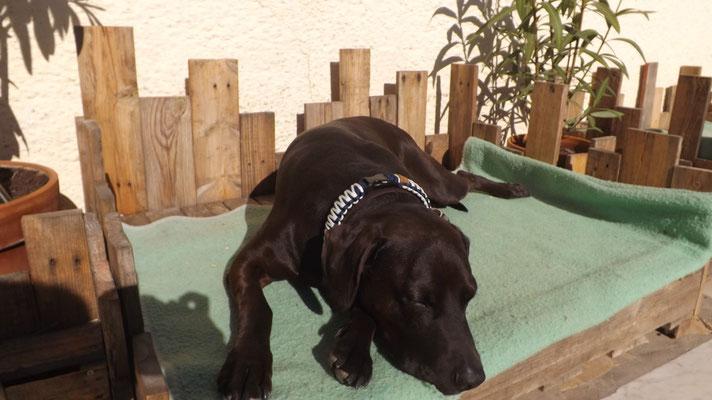 Fito mit seinem neuen Blau/Weißem Halsband