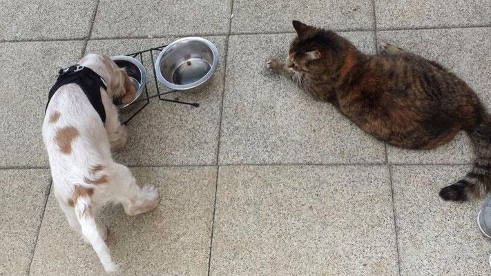 Chacky mit Katze