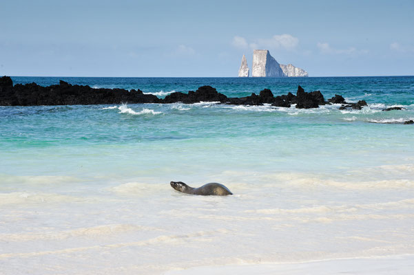 Sea Lion lounging on Cerro Brujo Beach on island of San Cristobal with Kicker Rock in the background