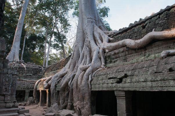 Ta Promh, Cambodia