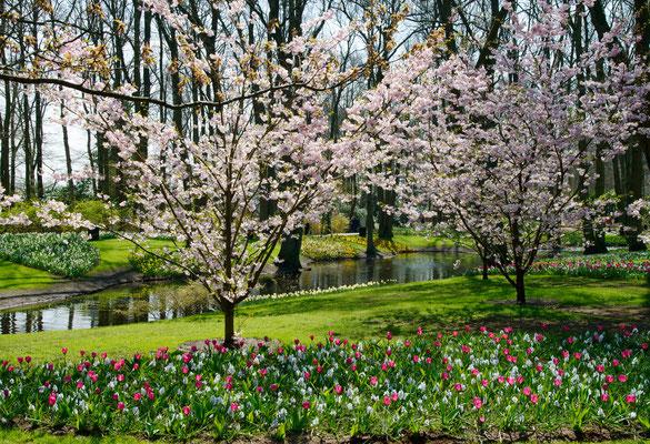 Kukenhoff Gardens, Belgium