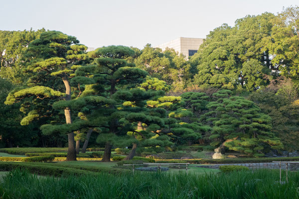 Imperial East Garden, Tokyo