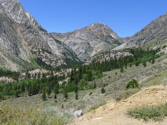 Mt. Dana from Hwy 120