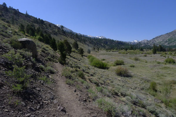 Trail to Lane Lake thru Leavitt Meadows