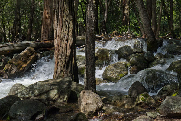 Yosemite Creek, Yosemite