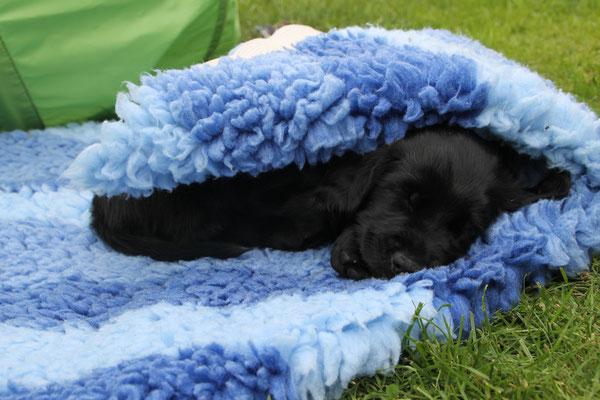Rüde blau und die baue Decke :-)