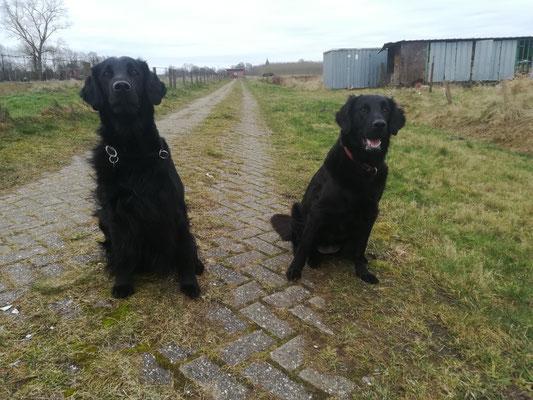 Arico und Holly