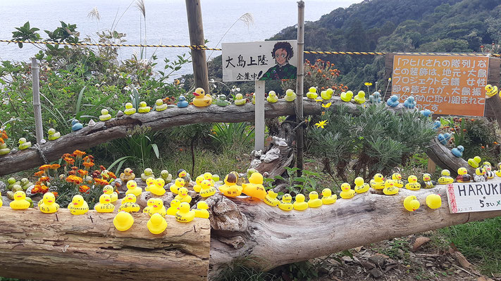 「アヒルさんの隊列」など、大島プロジェクト会議の皆さんが、大島振興のために取り組まれています。