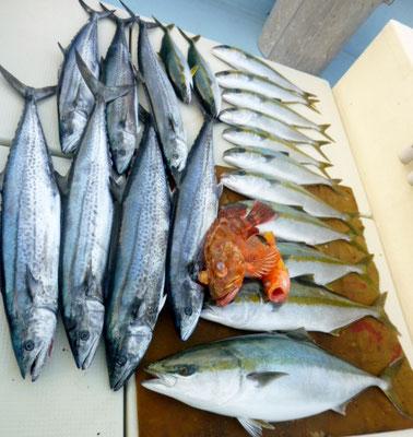 1月4日初釣り今日の釣果