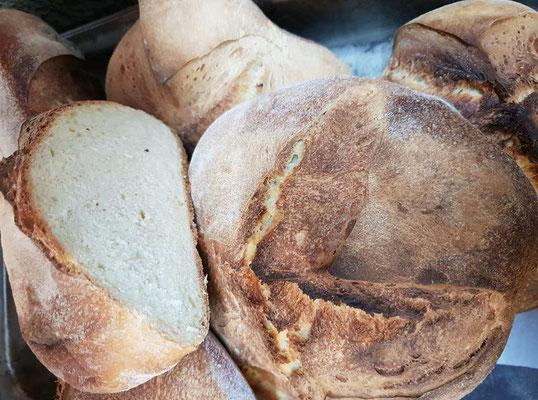 Das Altamura-Brot ist sicher eines der berühmtesten Brote Italiens. Gleichzeitig ist es eines jener Brote, das – wenn es traditionell hergestellt wird – zu den aromatischsten und köstlichsten Weizenbroten gehört
