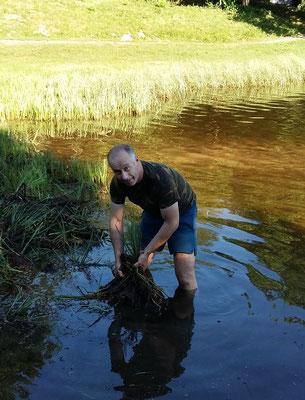 Extraction de la plante dans l'eau