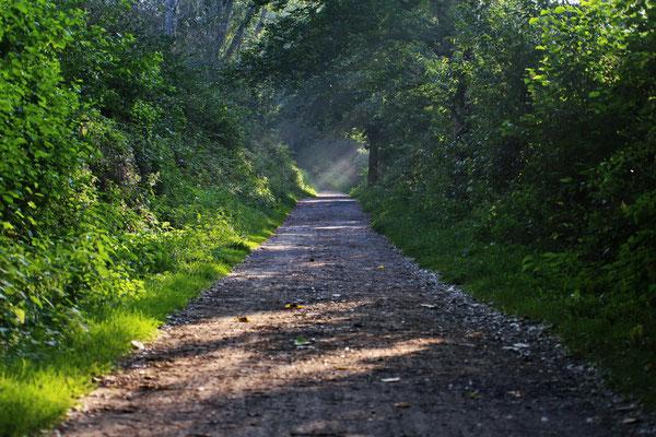 Spazierweg am Hullerner See.
