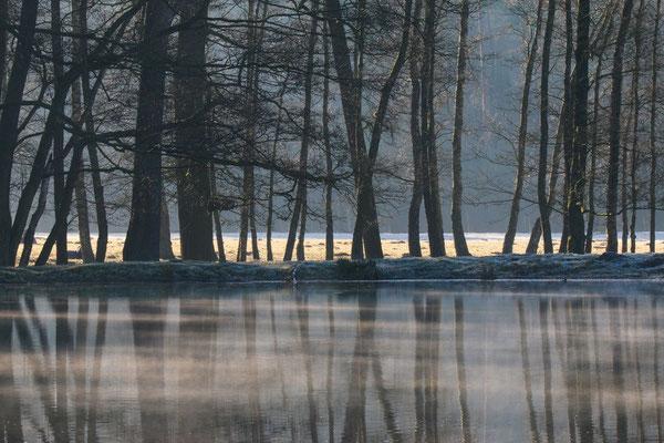 Winter im Wildpark Dülmen