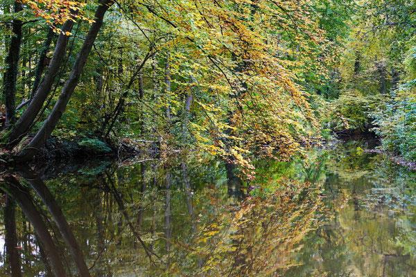 Der Mühlbach in Haltern-Sythen Ende Oktober.