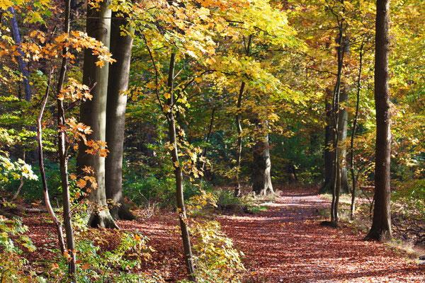 Spazierweg am Hullerner Stausee morgens im Herbst.