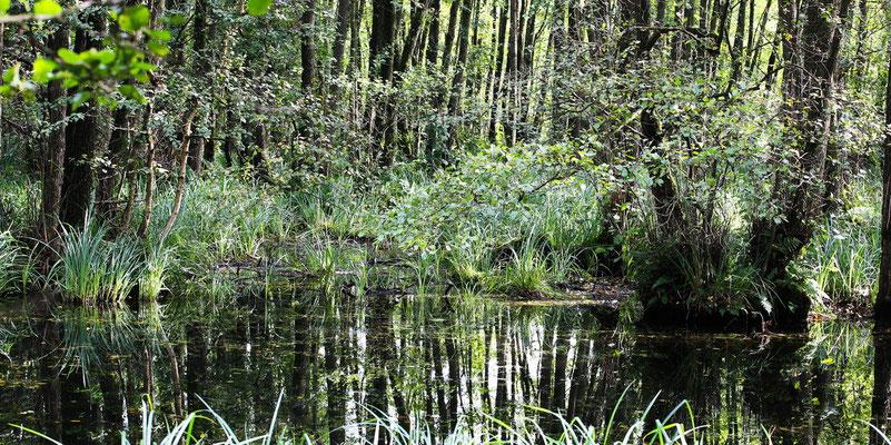 Morgens im/am Naturschutzgebiet in Merfeld