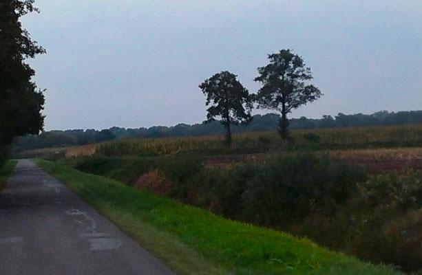 Landweg met rechts natuurgebied
