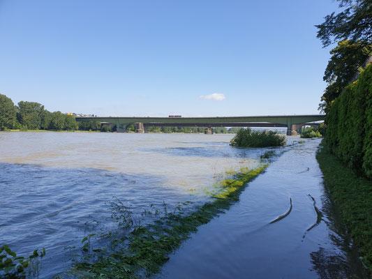 Hochwasser am Rheinradweg
