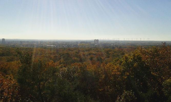 Aussicht vom Kolkturm, Dölauer Heide