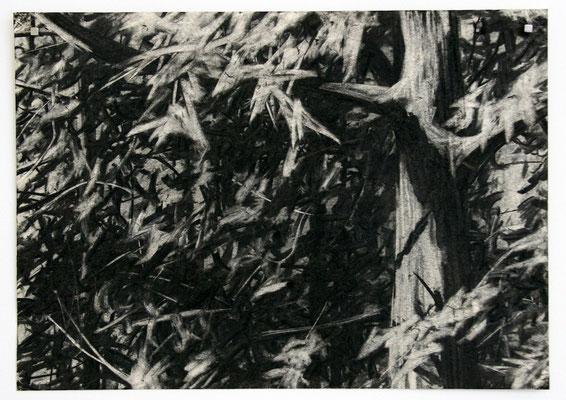 tree 02, 2010, Kohle auf Papier, 25x35 cm