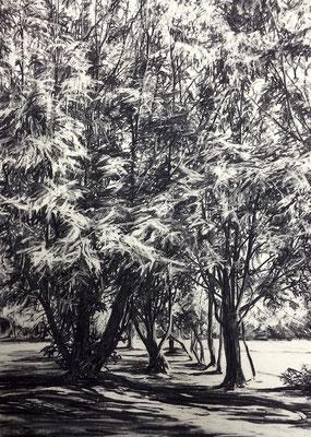 Ferberpark 01, 2014, Kohle auf Papier, 70x50 cm