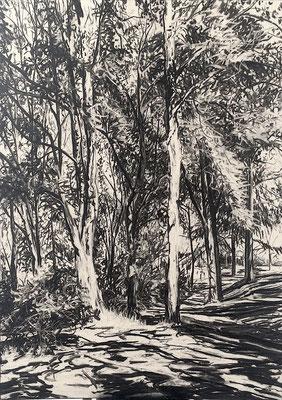 Hangeweiher 04, 2015, Kohle auf Papier, 70x50 cm, Private Sammlung DE