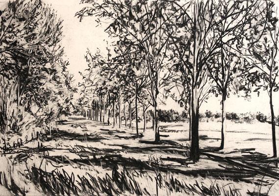 Amstelufer, 2015, Kohle auf Papier, 35x50 cm, Private Sammlung NL