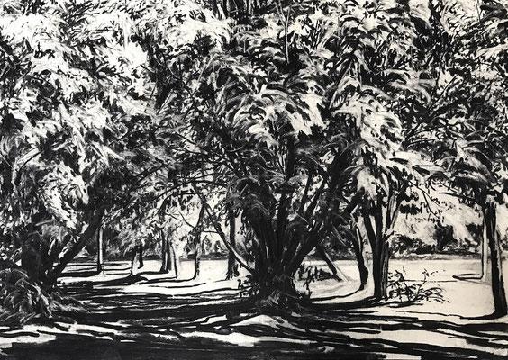 Ferberpark 03, 2017, Kohle auf Papier, 25x35 cm, Private Sammlung DE