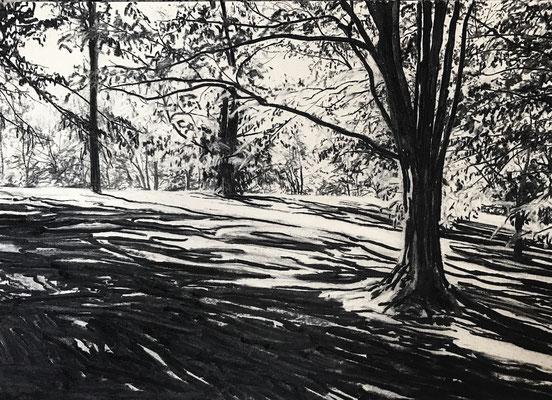 Kurpark 02, 2017, Kohle auf Papier, 25x35 cm