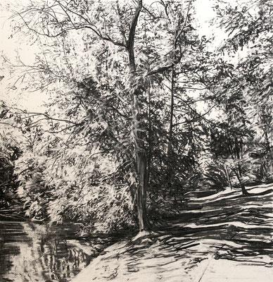 Hangeweiher 05, 2015, Kohle auf Papier, 50x50 cm