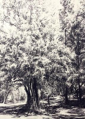 Ferberpark 02, 2014, Kohle auf Papier, 70x50 cm