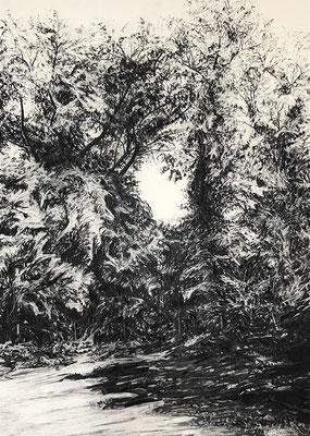 Gillesbachtal 03, 2017, Kohle auf Papier, 70 x 50 cm