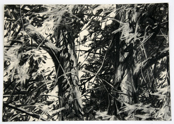 tree 01, 2010, Kohle auf Papier, 25x35 cm