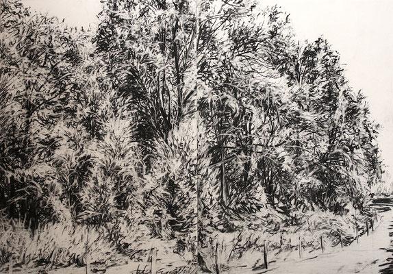 Gillesbachtal 01, 2015, Kohle auf Papier, 70x100 cm