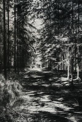 Wanderweg, 2011, Kohle auf Papier, 200x140 cm