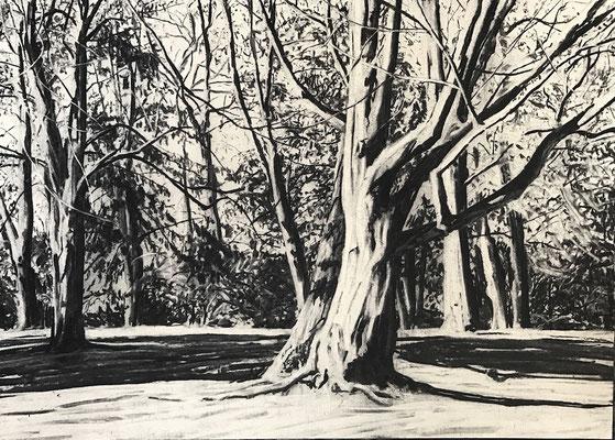 Westpark 01, 2017, Kohle auf Papier, 25x35 cm