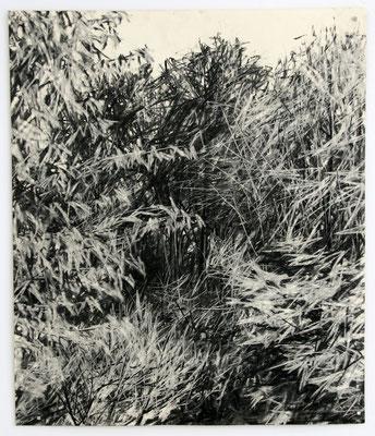 tree 03, 2010, Kohle auf Papier, 60x50 cm, Private Sammlung DE