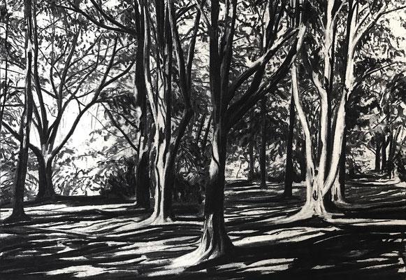 Kurpark 01, 2017, Kohle auf Papier, 25x35 cm, Private Sammlung DE