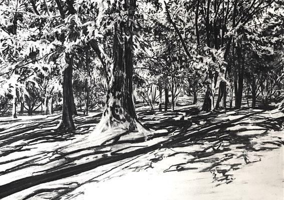 Kurpark 03, 2017, Kohle auf Papier, 25x35 cm