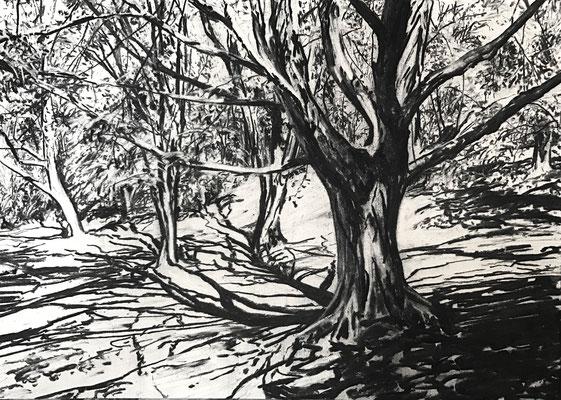 Kurpark 05, 2017, Kohle auf Papier, 25x35 cm