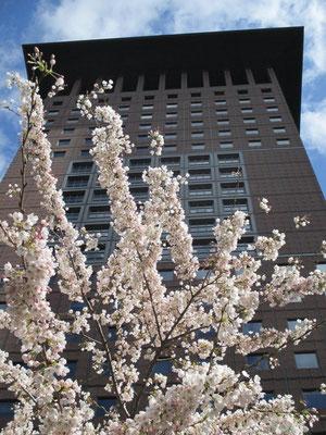 Lässt sich auch ohne Kirschblüten erkennen: das Japan Center