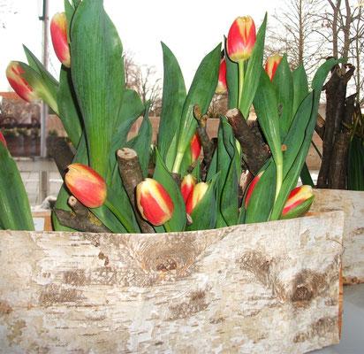 Tulpen im Birkengefäß