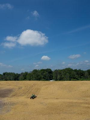 Hinterland und Landwirtschaft. Indiana, USA 6/2014