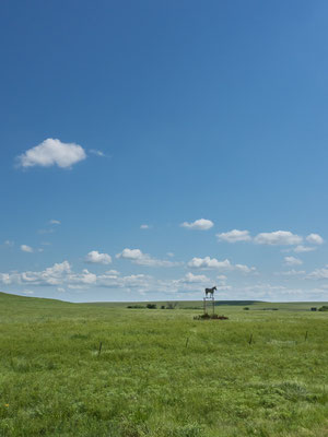 The beauty of the prairies... Kansas, USA 7/2014