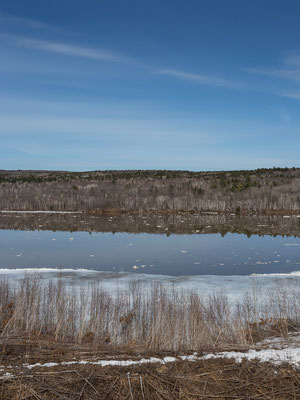 St Johns River. New Brunswick, Kanada 4/2014