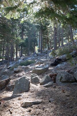 Endlich wieder Wald. Woodfords, Kalifornien, USA 9/2014