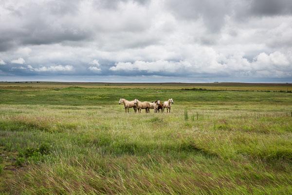 Die Schönheit der Prärie....Kansas, USA 6/2014